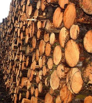 Timber, Lumber, Tree, Sawmill, Wood, Construction