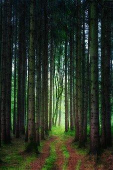 Forest, Away, Light, Green, Firs, Grass, Moss, Nature