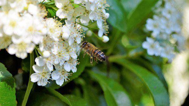 Bee, Nice, Bees, Nature, Flower, Close Up, Flowers
