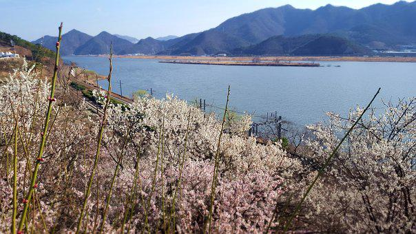 Spring, Landscape, Cherry Blossom, Beoc Flowers