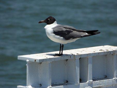 Bird, Ave, Sea