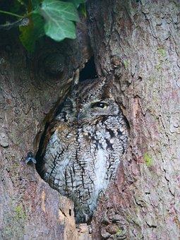Owl, Owl In Tree, Camouflaged, Bird, Animal, Wild, Eye