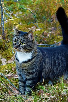 Cat, Forest, Gray