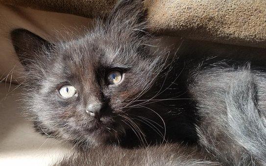 Cat, Kitten, Pet, Animal, Cute, Feline, Kitty, Fur