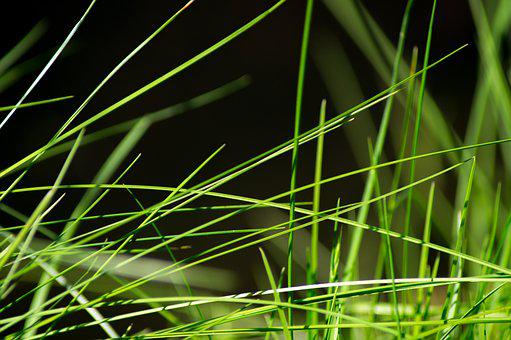 Grass, Meadow, Close, Green, Drop Of Water, Nature