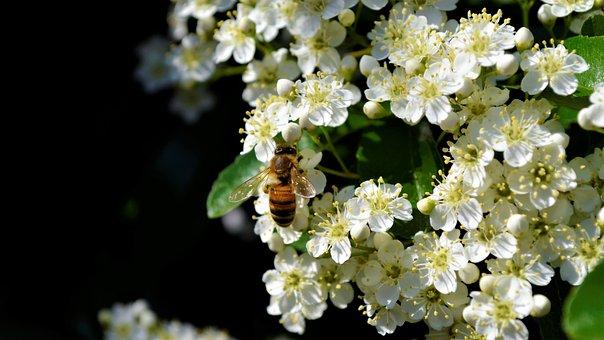Bee, Nice, Bees, Nature, Flower, Close Up, Garden