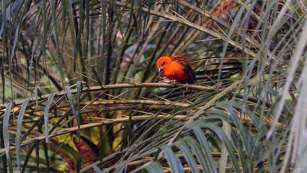 Bird, Parakeet, Exotic, Colorful