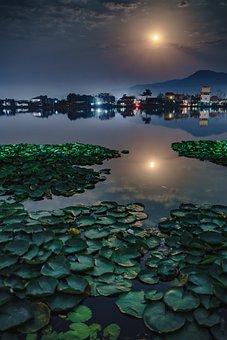 Moon, Moonlight, Pond, Night, Sky, Nature, Dark, Light