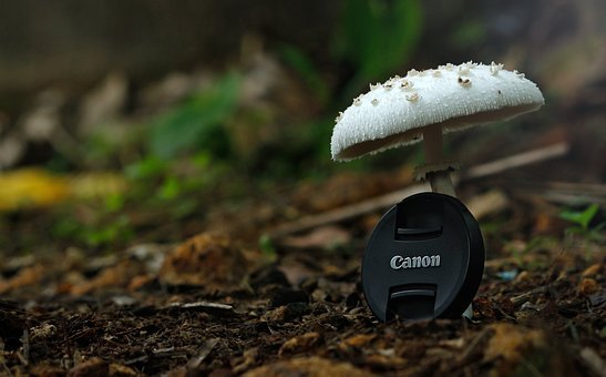 Canon, Canon Cap, Common Mushroom, Diet, Food, Fresh
