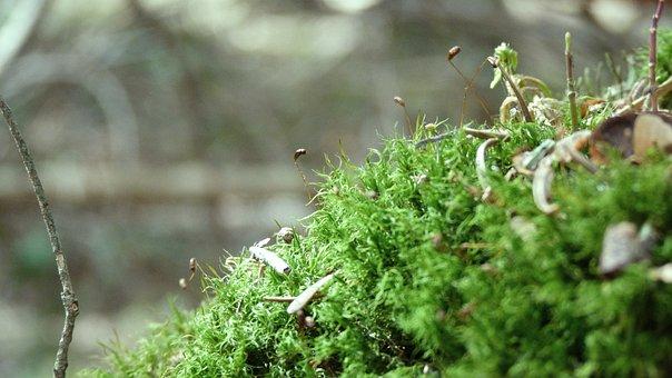 Nature, Foam, Green, Branch, Forest, Pierre, Tree