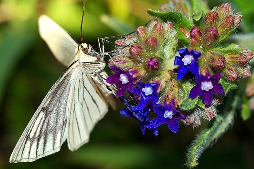 A Moth, Insect, Nature, Macro