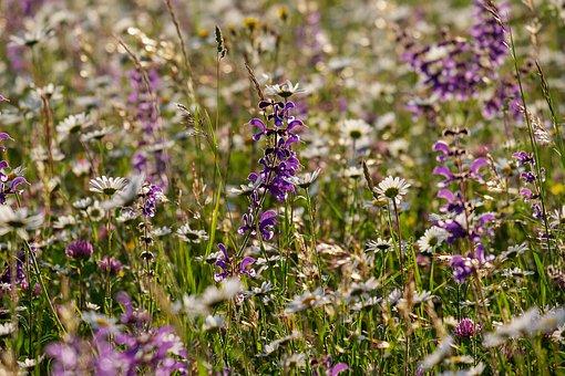 Wild Flower Meadow, Flowers, Bloom, Meadow, Spring