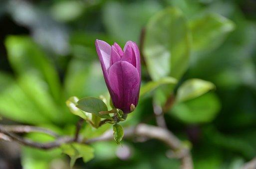 Flower, Natural, Floral, Garden, Blossom, Plant, Season
