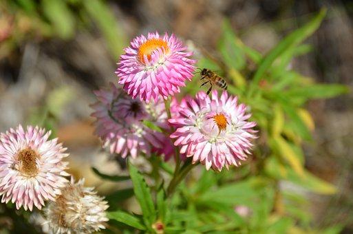 Flower, Natural, Nature, Floral, Garden, Blossom
