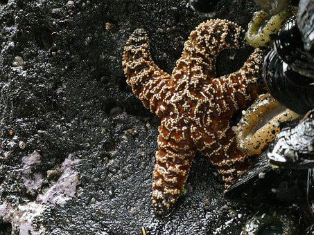 Starfish, Ocean, Beach, Marine, Life, Animal, Wildlife