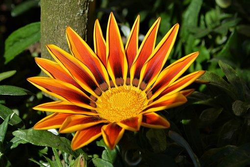 Blossom, Bloom, Flower, Orange, Yellow, Close, Nature
