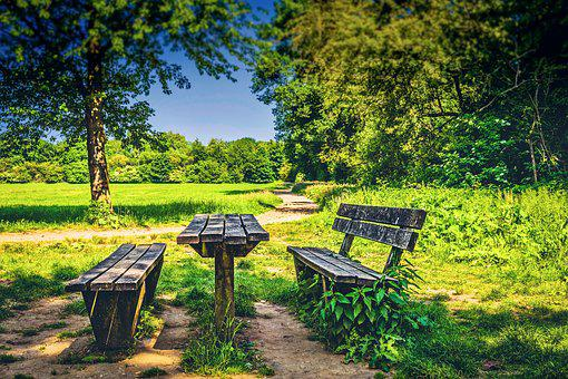 Park, Bench, Pause, Landscape, Nature, Tree, Green, Day