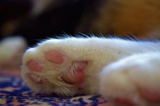 Cat, Paw