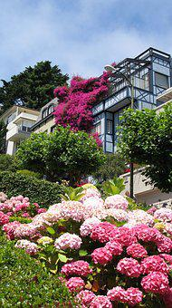 San Francisco, Pink Flowers, Lombard Street
