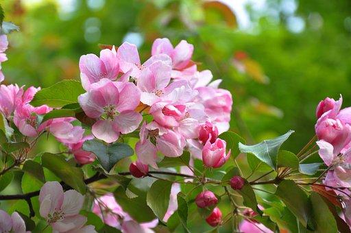 Spring, Flowers, Flowering Tree, Tree, Plant