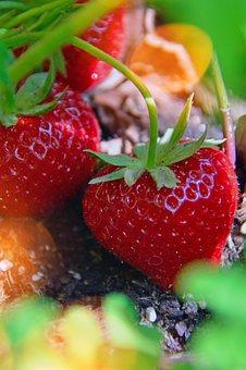 Ripe Strawberry, Red Strawberries, Fruit, Strawberry