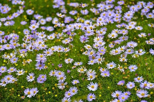 Flower, Bloom, Blossom, Plant, Garden, Blooming, Season