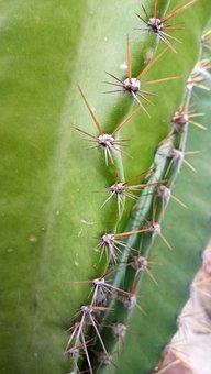Cactus, Spins, Fork
