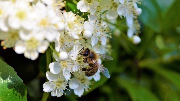 Nice, Flower, Nature, Flowers, Spring, Bloom, White
