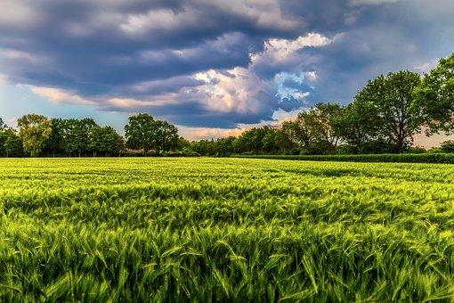 Field, Crop, Storm, Agriculture, Farm, Rural, Landscape