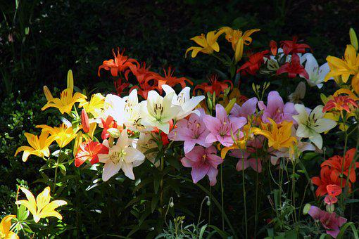 Summer Flowers, Summer, Nature, Plant, Blossom, Sun
