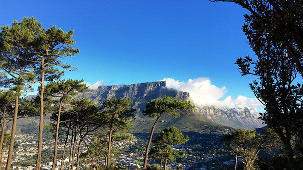 South Africa, Cape Town, Table Mountain, Nature