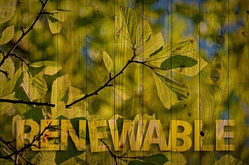 Renewable, Tree, Aesthetic, Ecology, Environment