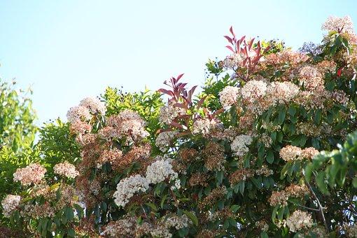 Flower, Tree, Sky