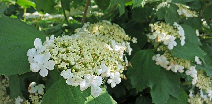 Flower, White, Wild, Wild Flowers, Field