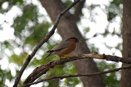 Bird, Nature, Branch, Wildlife, Wild, Blue, Beak