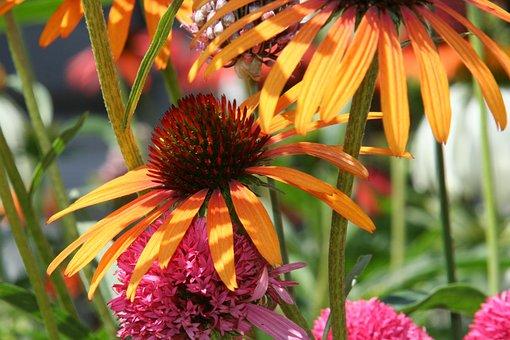 Wildflowers, Garden, Flower, Flora, Meadow, Plant