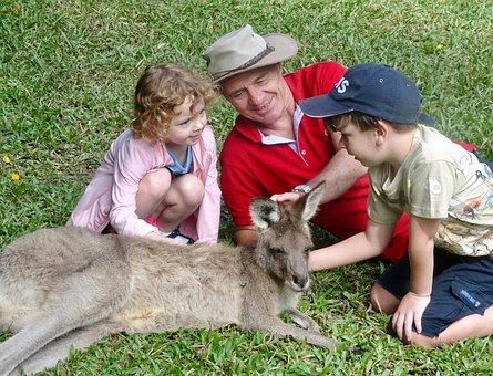 Kangaroo, Family, Wildlife, Australia, Animal, Cute