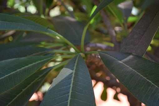 Leaf, Trees, Nature, Natural, Wildlife