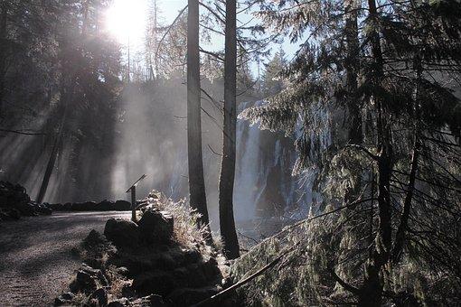 Woods, Trees, Waterfall