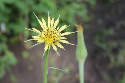 Summer, Yellow, Flower, Plant, Nature, Macro