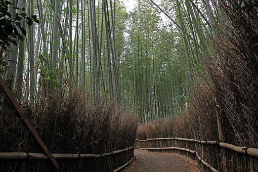 Bamboo, Forest, Natural, Arashiyama, Kyoto, Japan