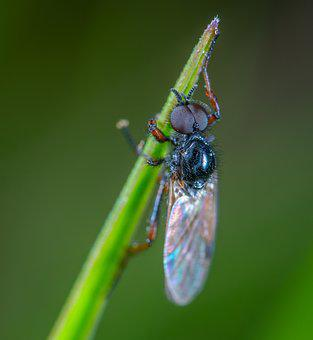Insect, Fly, Blade Of Grass