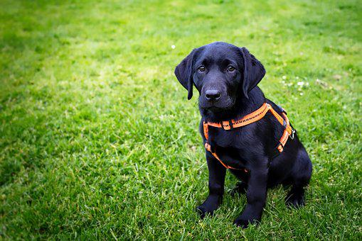 Puppy, Sad, Cute, Dog, Animal, Pet, Canine, Portrait