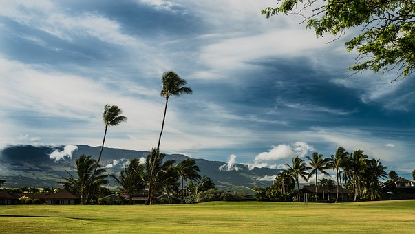 Maui, Palm, Green, Blue, Coconut, Sky, Plant, Tourism