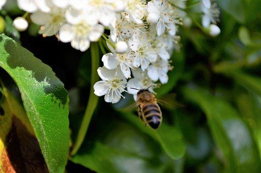 Bee, Nice, Bees, Flower, Honey, Close Up, Flowers
