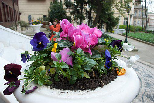 Flowers, Flower Bed, Garden, Summer Flowers, Plant