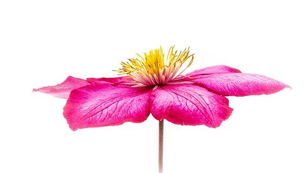 Flower, Macro, Purple, Bloom, Pollen, Orange, Flowers