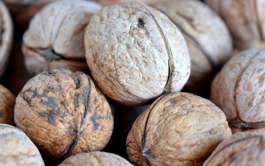 Walnut, Greek, Healthy, Tasty, Nutrition, Food, Fruit