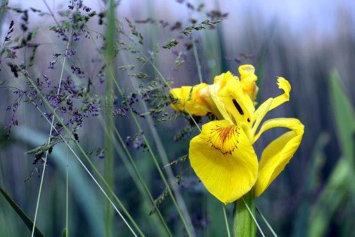 Meadow, Grass, Dew, Green, Field, Spring, Garden, Park