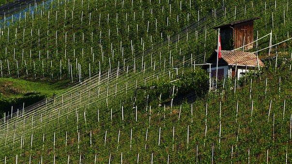 Landscape, Nature, Vineyard, Vines, Sun